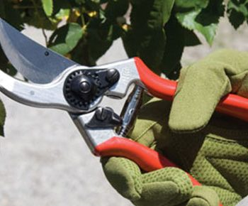 Tree Care & Pruning Supplies