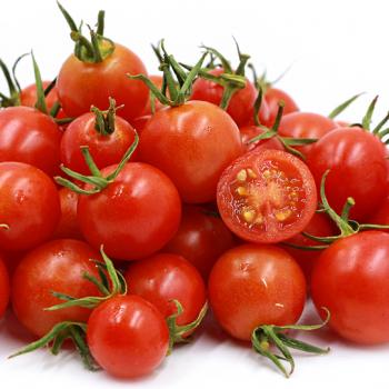 Power Pops F1 Hybrid Tomato Seeds